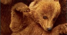 Bears News