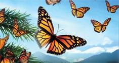 butterflies news