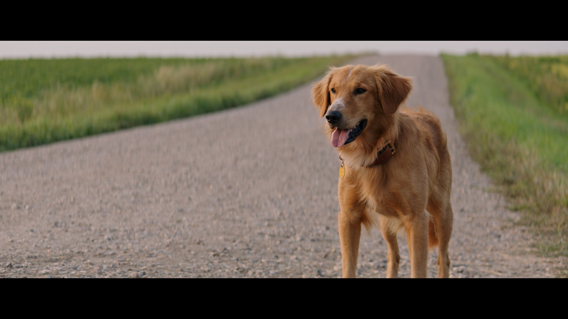 a dog s purpose blu ray review high def digest