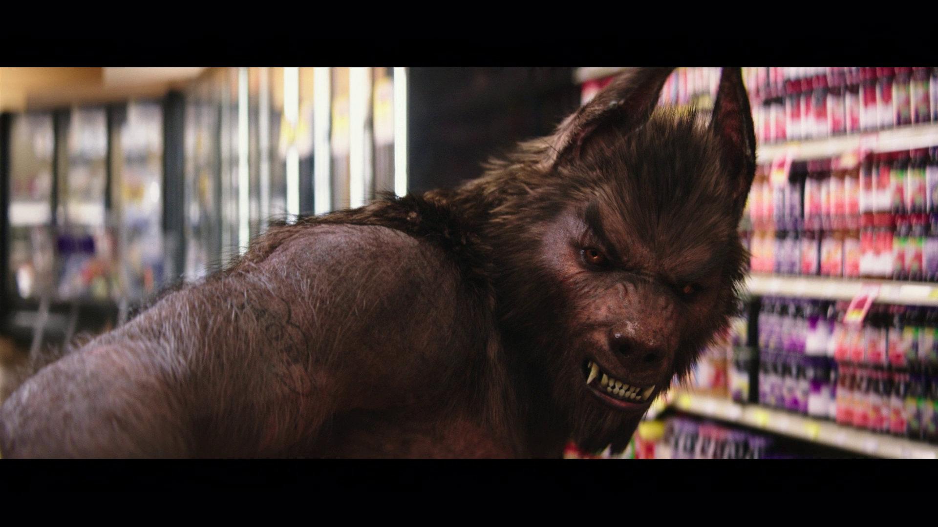Dog True Story Movies