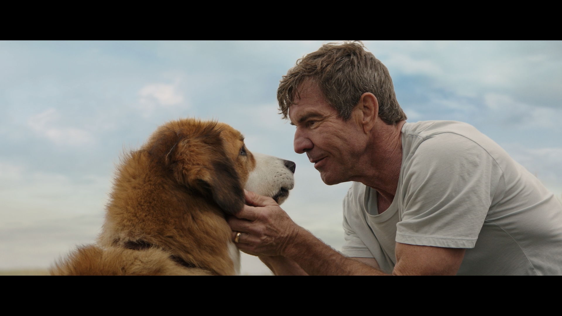 Dog S Purpose Movie